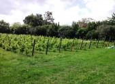 Rétrospective 2012  La vigne au Parc Joseph Bricaud