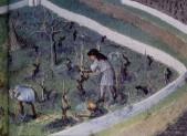 Histoire : 1 Les premières traces de la vigne en basse Loire et à Couëron