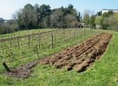 TRAVAUX PREPARATOIRES AVANT LA PLANTATION DE PRINTEMPS 24.3.16