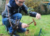 EMBELLISSEMENT DE LA PARCELLE : PLANTATION DE ROSIERS 31.3.16