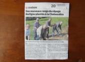 DES NOUVEAUX RANGS DU CEPAGE BERLIGOU PLANTES A LA CHABOSSIERE ( Presse Océan 26/05/16 )
