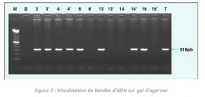PCR-image3